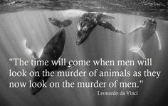"""The time will come when men will look on the murder of animals as they now look on the murder of men."" ~Leonardo Da Vinci"
