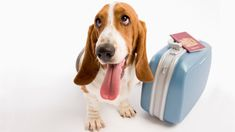 In our previous post, Considering Pets in Vacation Rentals, we mainly discussed the risks involved in accepting pets into your vacation rental home. But here's some advice for those of you who, like me, are willing to consider allowing pets. Before [...]