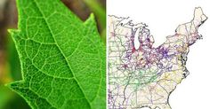 leaf veins smart grid biomimicry