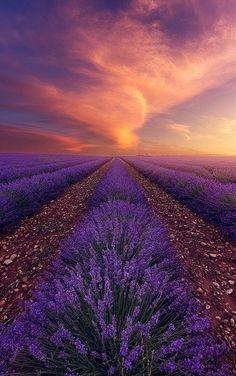 Lavender Field at Sunset, Valensole, Provence, France | Alexandre Ehrhard