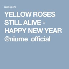 YELLOW ROSES STILL ALIVE - HAPPY NEW YEAR @niume_official