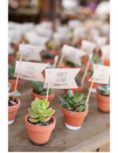 Inexpensive Solutions for Succulent Wedding Decor - Happily Ever After, Etc. Succulent Wedding Favors, Unique Wedding Favors, Wedding Flowers, Wedding Decorations, Wedding Ideas, Trendy Wedding, Wedding Gifts, Succulent Gifts, Perfect Wedding