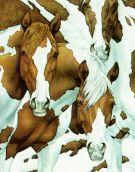 Bev Doolittle Art from the Gallery Josephs Fine Art Horse Pictures, Art Pictures, Hidden Pictures, Photos, Native Art, Native American Art, Horse Drawings, Art Drawings, Bev Doolittle