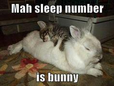 Sleep bunny nr