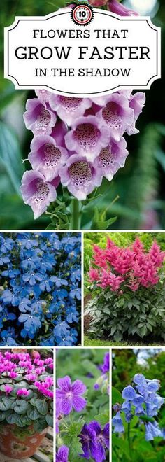 Top 10 Beautiful Shade-Loving Flowers 10 Flowers That Grow Faster In The Shadow Check out these 10 flowers that love full or partial shade blooming Perennials maintenance Perennials full sun ideas Perennial Flowering Plants, Shade Garden Plants, Garden Shrubs, Garden Paths, House Plants, Shade Loving Flowers, Types Of Flowers, Diy Flowers, Wedding Flowers