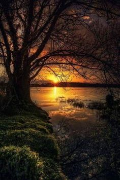 Image result for nature