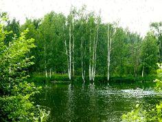 Ploaie de vara animație peste pădure verde și râu