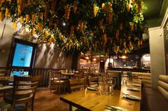 La Credenza Ristorante Marino : 14 best artificial wisteria trees & vines images on pinterest