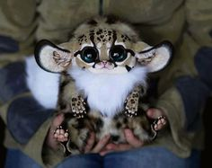 Inari Fox ... drowning in cuteness!