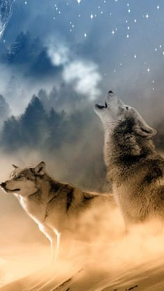 Home - Save gray wolf Wolf Images, Wolf Photos, Wolf Pictures, Artwork Lobo, Wolf Artwork, Beautiful Wolves, Animals Beautiful, Cute Animals, Wolf Love