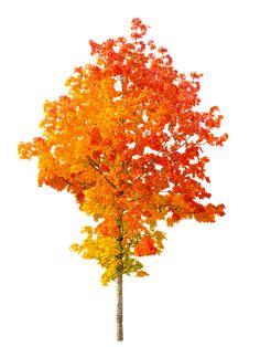 Природы, Осенью, Дерево, Осень