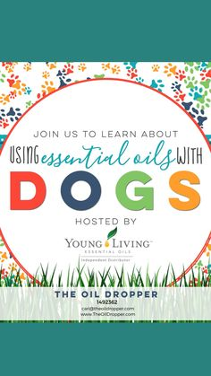Essential Oils Dogs, Doterra Essential Oils, Young Living Oils, Young Living Essential Oils, Puppy Care, Dog Care, Diffuser Recipes, Dog Things, Au Natural