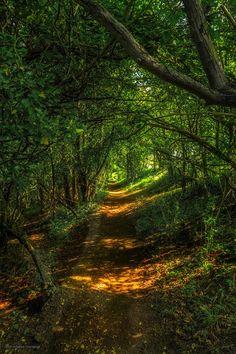 Remenham Wood near Henley-on-Thames, UK