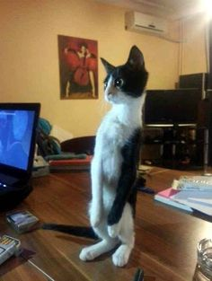 Funny Animal Pictures - View our collection of cute and funny pet videos and pics. New funny animal pictures and videos submitted daily. Funny Animal Videos, Funny Animal Pictures, Animal Memes, Funny Animals, Cute Animals, Videos Funny, Funny Photos, Ernst Hemingway, Cat Memes