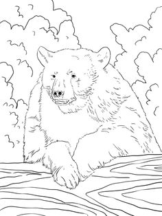 Realistic American Black Bear Coloring page Animal coloring pages