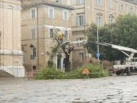 Marche: #Se fossi un #albero? Non vorrei mai vivere nella Senigallia dellera Mangialardi (link: http://ift.tt/2aw6KEo )