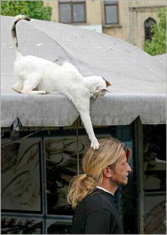 - Hmmm, una bola de lana rubia... | #Gato #Animales