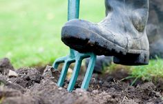 Dig in on BBC. Grow your own veg