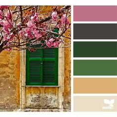 design seeds | search | for all who ♥ color ❤ liked on Polyvore featuring backgrounds, colors and design seeds