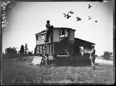 Nancy, Meurthe-et-Moselle, releasing pigeons for training.