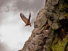 Wonderfull birds are the Griffon Vultures. On Crete you can see them aggregate in big flocks. I have seen up to sixteen at the same time in the white mountains of Crete. Crete Island, Heraklion, Cool Photos, Amazing Photos, Minoan, White Mountains, Bird Species, Ancient Greece, Beautiful Islands
