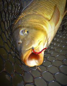 Best Carp Flies Fly Fishing