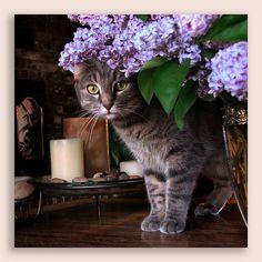 peeking through the lilacs