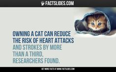 Owning a cat can reduce the risk of heart attacks and strokes by more than a third, researchers found.