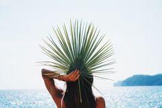 Palm leaf - Jennifer Sandsjö