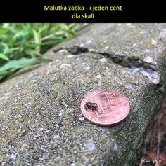 Small Frog, Polish Memes, Weird World, Kawaii, Chicken Nuggets, Humor, Funny, Random Stuff, Ss