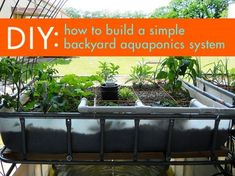 How To DIY Aquaponics - The How To DIY Guide on Building Your Very Own Aquaponic System How To DIY Aquaponics Break-Through Imagine a Garden Where There's No More Weeds