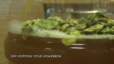Northern Brewer takes a look at the basic steps of dry hopping your homebrew. Dry hopping adds a whole new level of hop aroma and flavor to your homebrew. Beer Brewing, Home Brewing, Beer Hops, Homemade Beer, Craft Beer, Asparagus, Vegetables, Food, Gift