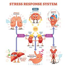 Understanding Our Body's Stress Response This article describes the fight or flight response of our bodies to stress. Fight Or Flight Response, No Response, Emotional Stress, Stress And Anxiety, Yoga Am Morgen, Work Stress, Reduce Stress, Stress Symptoms, Nursing Notes