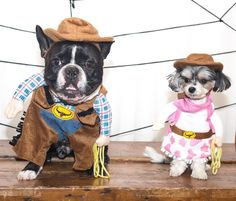 Ride 'em, cowboy! Oscar and Tinkerbelle are corralling up all the puppy treats in the Wild West. (Photo: @oscarfrenchienyc)
