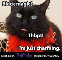 Black pets can wait up to 4x as long for a home as their lighter-colored friends. Help these pets find a home, educate your friends today!