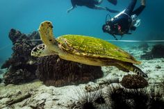 Contribute to marine conservation initiatives whilst living on a tropical island. Make a difference to conservation efforts, whilst learning - includes dive courses & conservation training. Marine Conservation, Gap Year, Thailand, Tropical, Island, Animals, Animales, Animaux, Time Out
