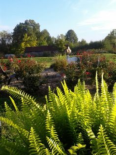 View from the Patio, Indian Spring Winery, Sardinia, Ohio. Photo by Trish Breedlove