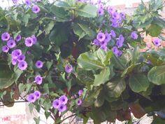 Flores sobre arbusto.