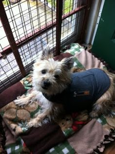 Col. Potter Cairn Rescue Network: Sunday Sweets Kayla