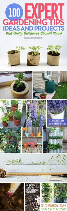 100 Expert #Gardening #Tips, #Ideas and #Projects that Every #Gardener Should Know via @vanessacrafting