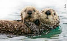 Ocean Conservancy: http://www.oceanconservancy.org/