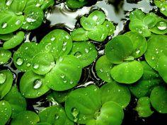 Green makes me happy...