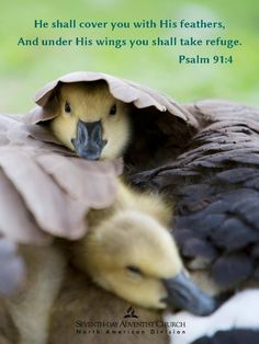 Psalm 91:4  He will cover you with his wings; you will be safe in his care; his faithfulness will protect and defend you.