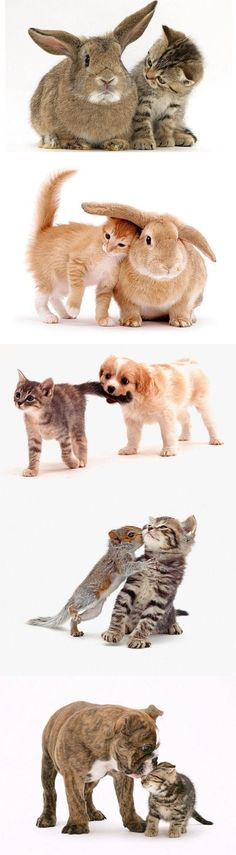Kittens and .... Awwwwwww By Jane Burton. - www.telegraph.co.... - Pixdaus