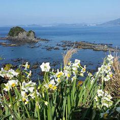 【michirinchan2】さんのInstagramをピンしています。 《おはようございます☀  今日も青空で気持ちのよい朝です✴  今日も素敵な一日になりますように~❤ 水仙の花言葉は、自己愛。  #日本水仙#日本水仙#水仙#スイセン#白い花#花好き#自然#野母崎#長崎#海#風景#青空ラブ#島#カコソラ#narcissus#whiteflower#flowerlove#flowerpic#flowertalking#nagasaki#sea#bluesky#skylovers#instasky#landscape#ic_flowers#igersjp#####》