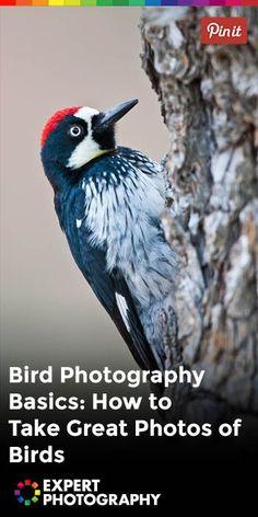 Bird Photography Basics: How to Take Great Photos of Birds » ExpertPhotography