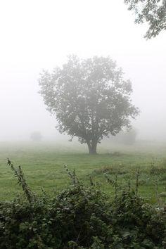 Boom in nevelen gehuld -  Chanxhe / Fraiture Belgie september 2013
