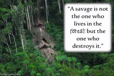 destroying nature is destroying life - Google Search
