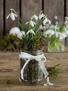 Snowdrops, Moss & Lace .....