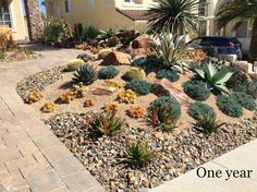 After the Lawn: A Front Yard of Succulents